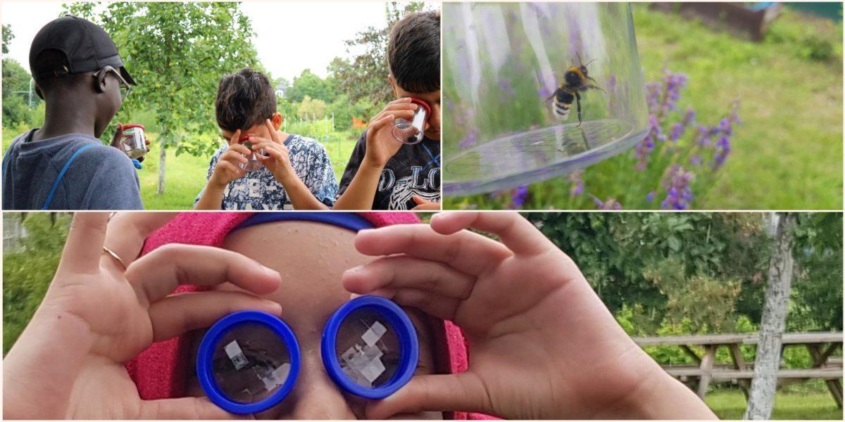 Wir beobachten Wildbienen im Schulgarten
