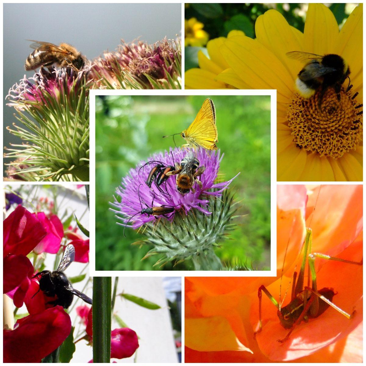 Was summt denn da? Bienen und Insektenwanderung