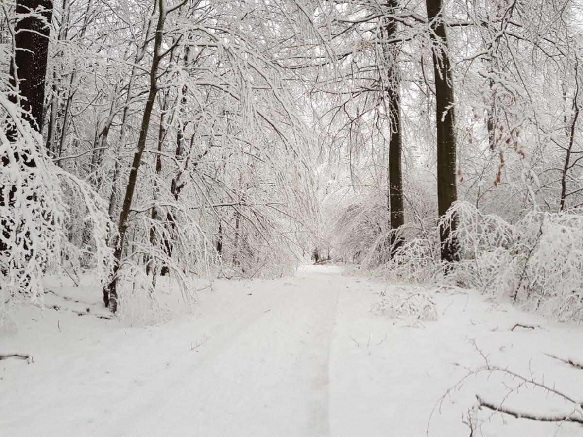 Monatswanderung Februar – Durch den Düppeler Forst